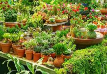 Tips-to-Keep-Your-Garden-Organized-and-Fresh-on-americastrend