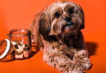 Buy-Dog-Treats-Like-An-Intelligent-Buyer-on-AmericasTrend
