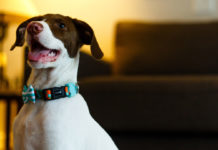 The-Ultimate-Guide-on-When-to-Use-a-Dog-Tie-Out-on-americastrend