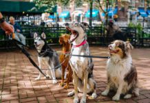 Why-You-Should-Hire-a-Pet-Sitter-This-Summer-on-americastrend