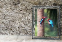 5-Things-to-Know-Before-Buying-the-Best-Digital-Photo-Frame-on-americastrend
